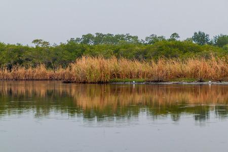 Wetlands of the wildlife reserve Biotopo Monterrico-Hawaii, Guatemala Stock Photo - 79545163