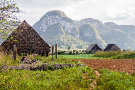 Landscape of tobacco fields and drying houses near Vinales, Cuba Stock Photo