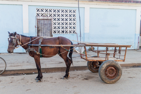 Horse waiting with its cart in Vinales village, Cuba