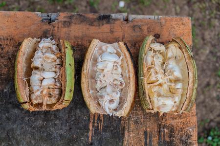 Freshly opened cocoa beans Stock Photo