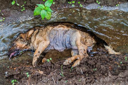 Dode hond in een greppel Stockfoto - 92609781