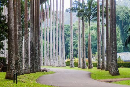Palm alley in Royal Botanic Gardens near Kandy, Sri Lanka