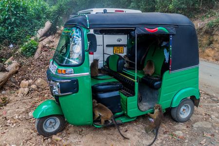 HAPUTALE, SRI LANKA - JULY 16, 2016: Macaques infested a tuk tuk, eating a food inside, parked in Thangamale sanctuary near Haputale.