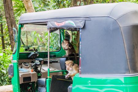 HAPUTALE, SRI LANKA - JULY 16, 2016: Macaques infesting a tuk tuk parked in Thangamale sanctuary near Haputale.