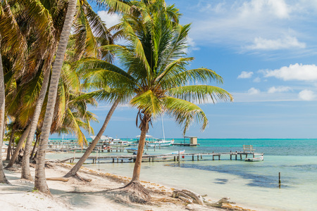 Palms and piers at Caye Caulker island, Belize