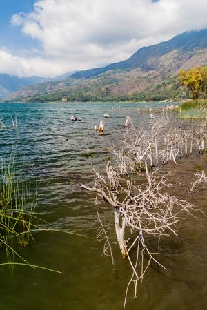 Coast of Atitlan lake, Guatemala. Rising levels of this lake causing submersion of trees.