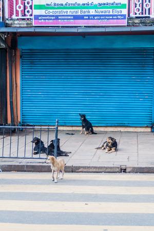 NUWARA ELIYA, SRI LANKA - JULY 16, 2016: Stray dogs on a street in Nuwara Eliya town.