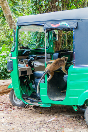 HAPUTALE, SRI LANKA - JULY 16, 2016: Macaque entering a tuk tuk parked in Thangamale sanctuary near Haputale.  Editorial