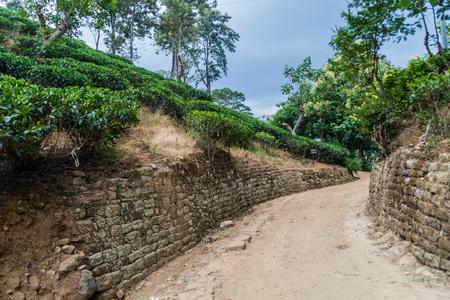 Path through tea plantations near Ella, Sri Lanka Stock Photo