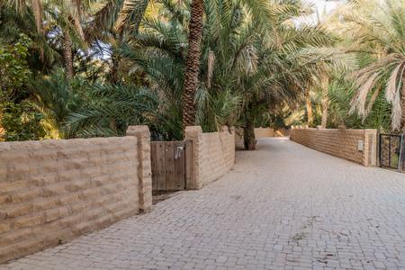 Palms in Al Ain oasis, United Arab Emirates Stok Fotoğraf
