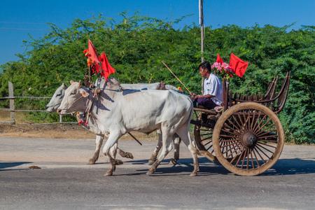 BAGAN, MYANMAR - DECEMBER 6, 2016: Zebu pulled cart on a road in Bagan, Myanmar