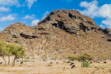 View of Wadi Dharbat near Salalah, Oman