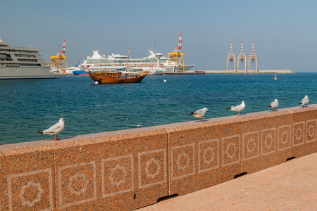 Sea gulls at Mutrah Corniche in Muscat, Oman