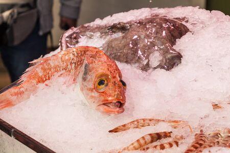 Fish at a stall in Mercado de San Miguel market in Madrid, Spain