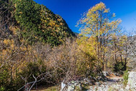 Forest in Madriu-Perafita-Claror Valley, Andorra Reklamní fotografie