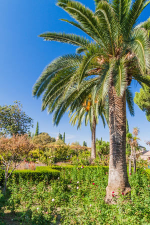 Palm garden at Alhambra fortress in Granada, Spain Editorial