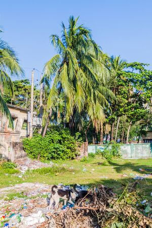 Houses, palms and garbage in Khulna, Bangladesh
