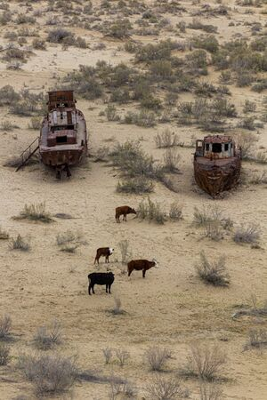 Rusty abandoned ships at the Ship cemetery at the former Aral sea coast in Moynaq (Mo'ynoq or Muynak), Uzbekistan