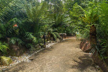 Path in Singapore Botanic Gardens.