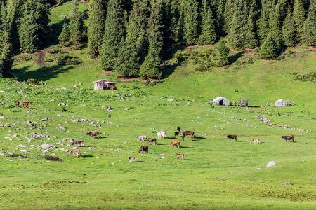 Pasture in Arashan valley in the Terskey Alatau mountain range, Kyrgyzstan
