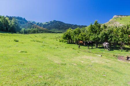Horses at a meadow near Kerege Tash village near Karakol, Kyrgyzstan