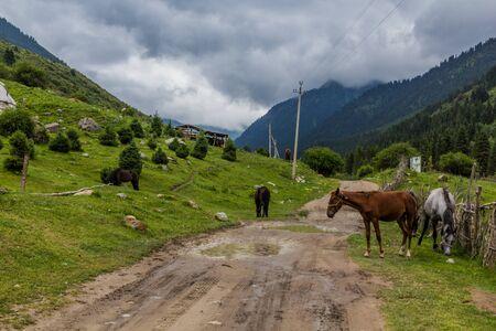 Horses in Karakol river valley in Kyrgyzstan