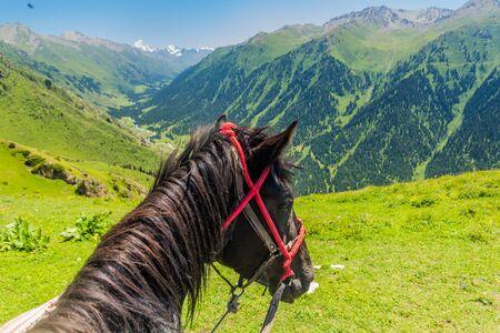 Horse looking into Ak Su valley near Karakol, Kyrgyzstan