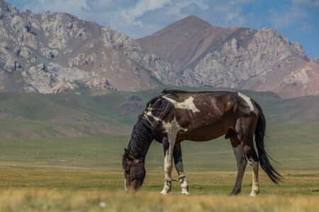 Horse on a meadow in the mountains of Kyrgyzstan