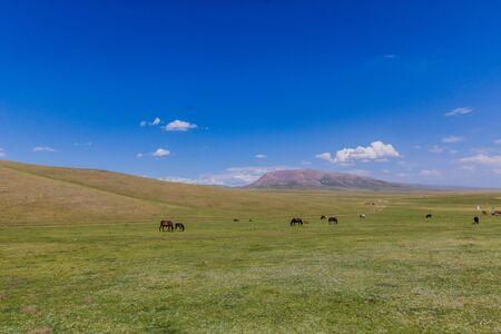 Horses on a pasture near Song Kul lake, Kyrgyzstan