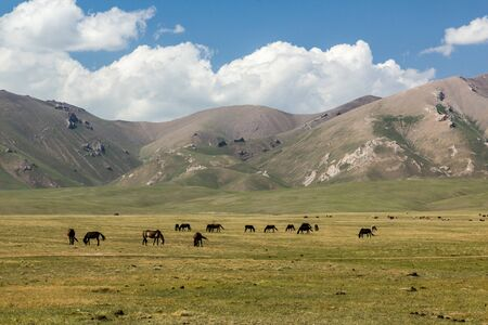 Horses on a meadow in the mountains of Kyrgyzstan