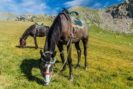 Horses on a meadow near Karakol, Kyrgyzstan