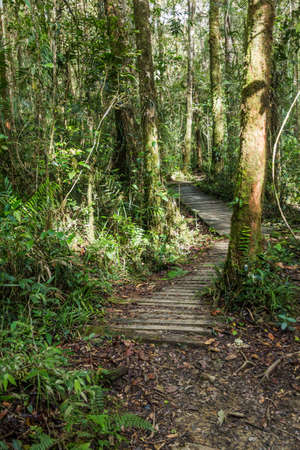 Hiking trail in a forest of Kinabalu Park, Sabah, Malaysia