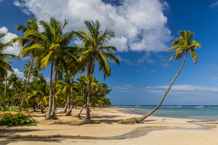 Palms at a beach in Las Terrenas, Dominican Republic Archivio Fotografico