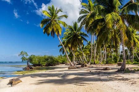 Palms at a beach in Las Terrenas, Dominican Republic Foto de archivo
