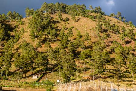 Forested hill near Constanza, Dominican Republic