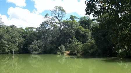 amazon forest: Amazon forest in the transition area to the Brazilian Cerrado