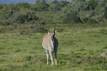 Elend in West Cape of South Africa