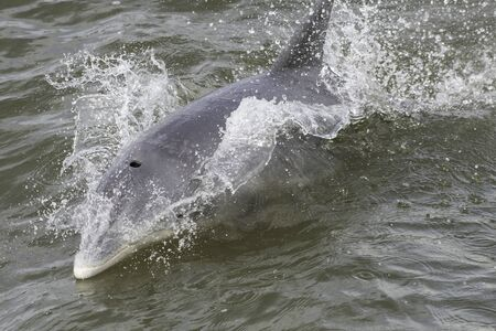 Bottlenose dolphin in Aransas National Wildlife Refugee