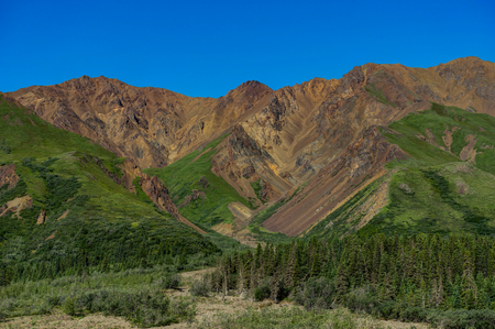 Mountain Panorama view with Trees in Denali National Park in Ala