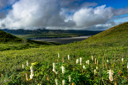 Nature view with flowers and clouds in Denali National Park in A Stock Photo