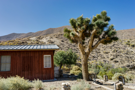 Joshua Tree met huis en blauwe hemel in Death Valley National Park