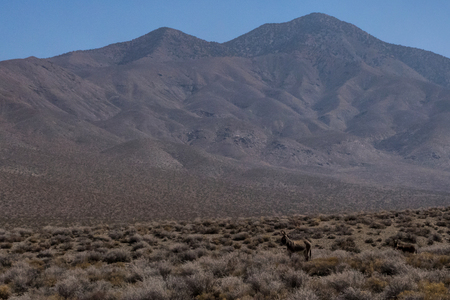 Desert Nature View in Death Valley National Park California Nevada