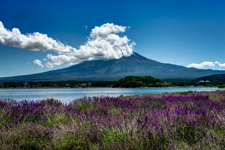 View to Mount Fuji lavender in Summer with blue sky and clouds w