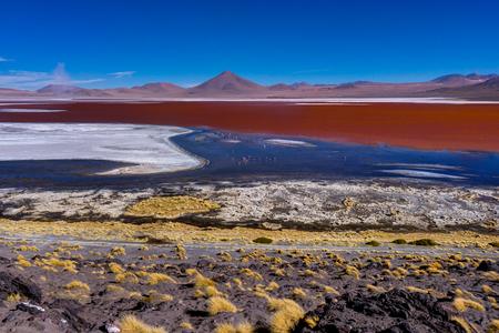 Pink Flamingos at Laguna Colorada Altiplano Bolivia Stock Photo