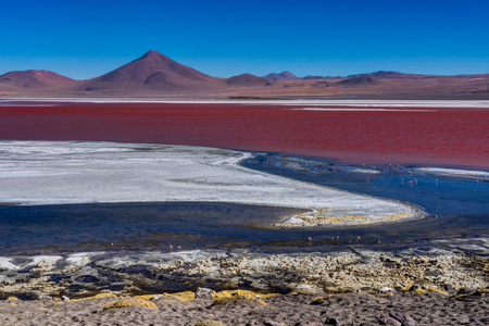 Pink Flamingos at Laguna Colorada Altiplano Bolivia Stock Photo