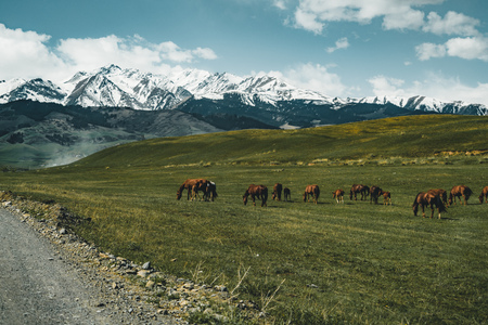 horses Street in steppe with Tian Shan mountains in background, Kazakhstan Central Asia