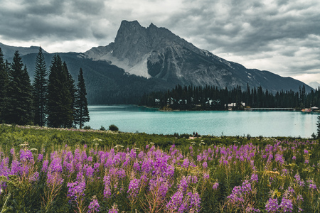 Emerald Lake in Canadian Rockies with mountains and flowers lake and trees. Concept of active vacation and tourism. Stock Photo