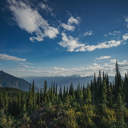 View from Mount Revelstoke across forest with blue sky and clouds. British Columbia Canada. Reklamní fotografie