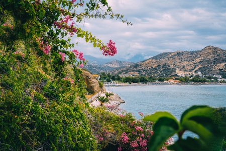Photo of bougainvillea flower in picturesque island of Greece with mountains and sky and clouds in the background. Stock Photo