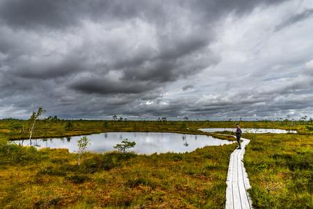 Misty bog landscape with Viru Raba moor in the morning. Lahemaa National park in Estonia. Stock fotó